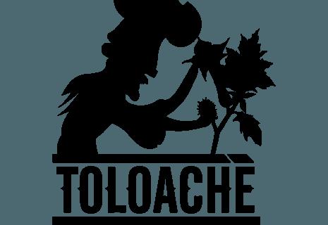 Toloache-avatar